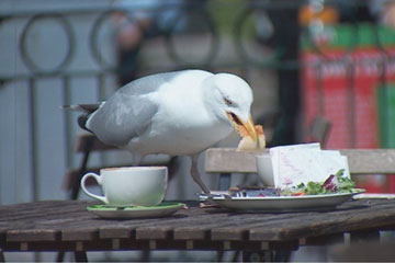 Problems caused by gulls